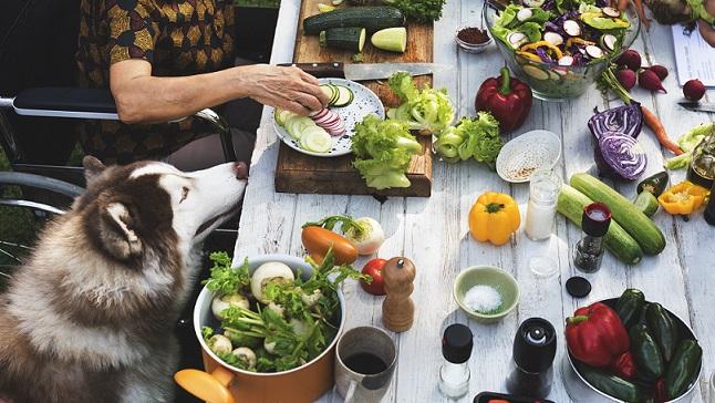 אוכל איכותי לכלבים – התאמה של האוכל לכלב